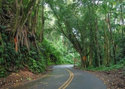 road-to-hana-curves