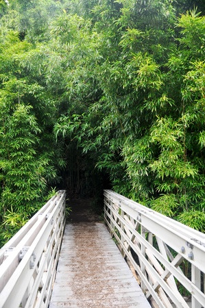 bamboo-forest-hana
